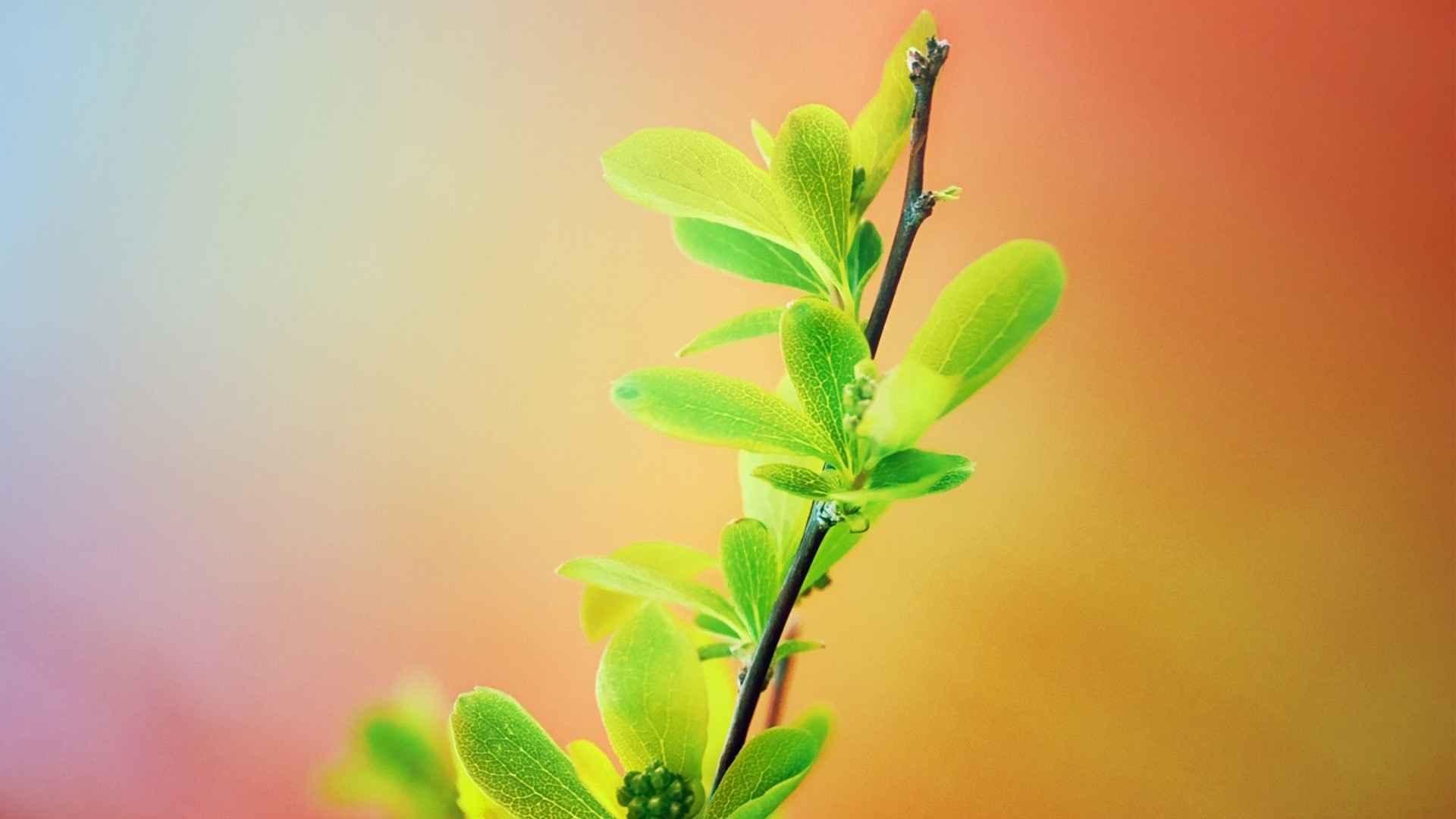تصاویر گلهای زیبا برای پس زمینه