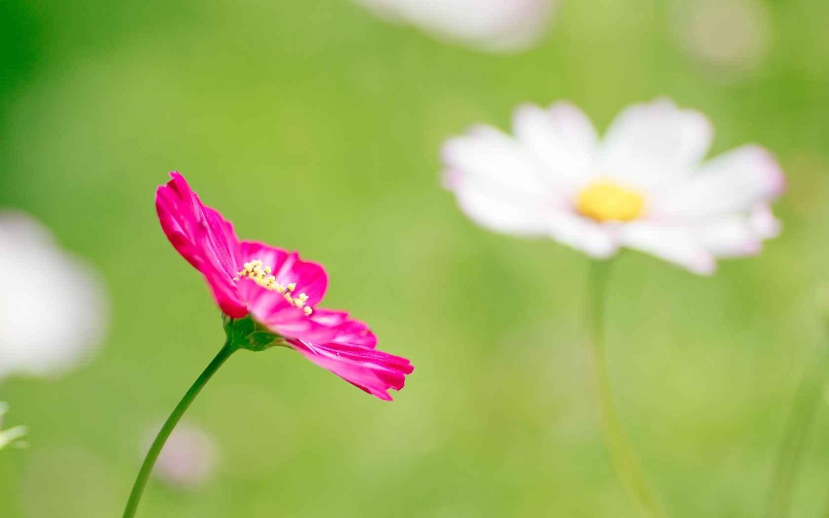 عکس گل های زیبا و قشنگ - تصاویرزیبا عکس های زیبا